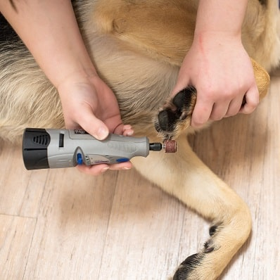 Dog getting nail grinding
